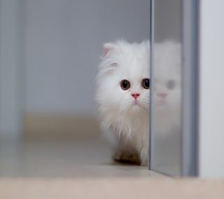 Обои на телефон кошки, милые, белые