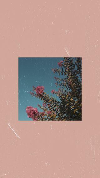 Обои на телефон эстетические, цветы, розы