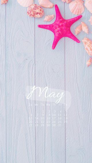 Обои на телефон ракушки, календарь, starfush, may2018, may 2018 seashells, may 2018, may