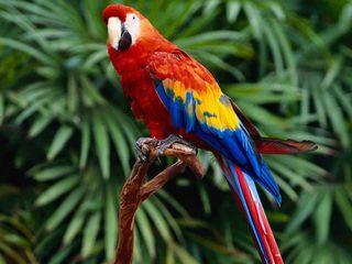 Обои на телефон попугай, попугаи, macaw