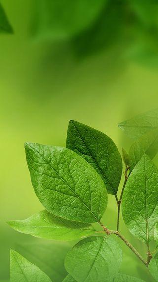 Обои на телефон макро, экран блокировки, хуавей, стандартные, листья, зеленые, p10, huawei, 1080p