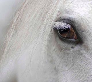 Обои на телефон мягкие, лошадь, лицо, голова, глаза, взгляд, белые