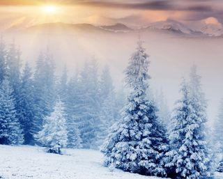 Обои на телефон восход, снег, пейзаж, зима, деревья, winter landscape, freeze