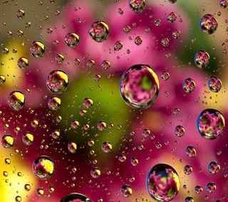 Обои на телефон капли, цветы, цветочные, вода