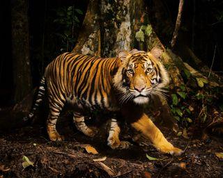 Обои на телефон зоопарк, дикий, джунгли, тигр, животные, дерево