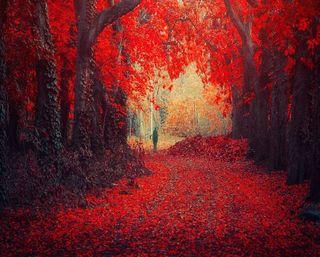 Обои на телефон прогулка, природа, осень, одиночество, листья, лес, красые, деревья, walk alone, red nature, red forest