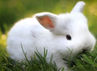 Обои на телефон кролики, питомцы, милые, животные, белые