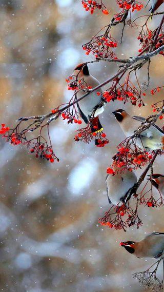 Обои на телефон птицы, листья, дерево, прекрасные, ветви