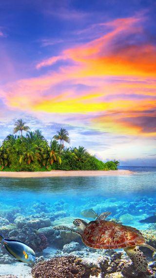 Обои на телефон остров, тропические, рыба, пляж, море, мир, мальдивы, sea world, makdives