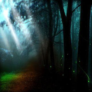 Обои на телефон сад, свет, природа, пейзаж, крутые, зеленые, glorious green, cool garden