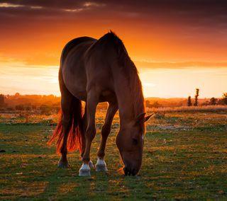 Обои на телефон лошадь, любовь, аниме, love