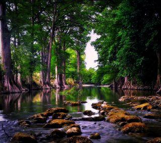 Обои на телефон приятные, новый, природа, озеро, лес, вид, nature view