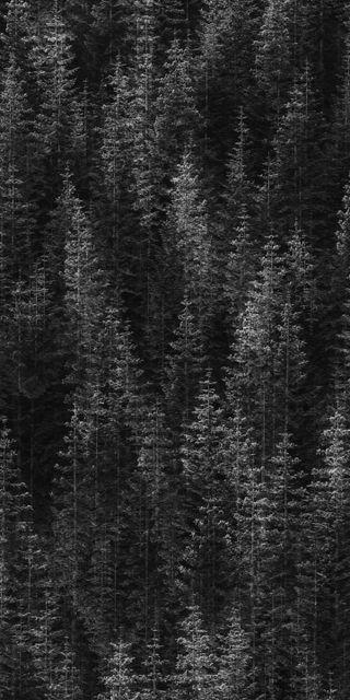 Обои на телефон черные, лес, домашний экран, дизайн, xl, quadhd, pixel, black forest