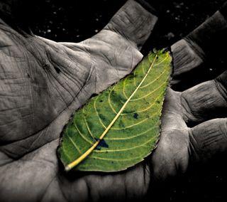 Обои на телефон рука, листья