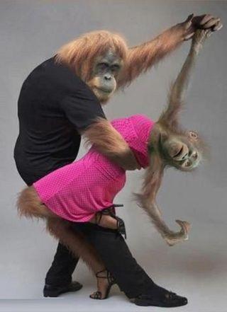 Обои на телефон танец, обезьяны