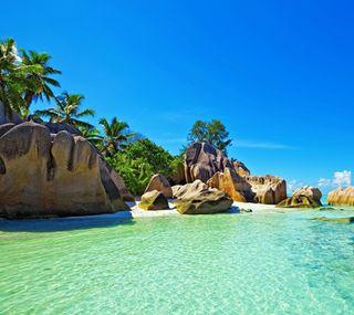 Обои на телефон пальмы, океан, пляж, море, вода, vacationes