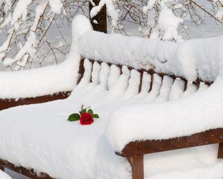 Обои на телефон парк, цветы, снег, скамейка, розы, одинокий, зима, lonely flower, abandoned park