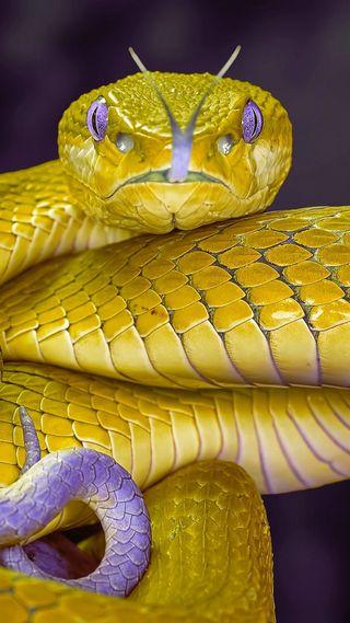 Обои на телефон змея, кожа, золотые, животные, желтые, hd, golden snake