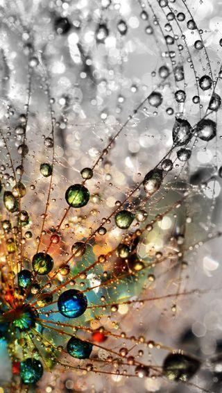 Обои на телефон мокрые, цветные, одуванчик, капли, абстрактные
