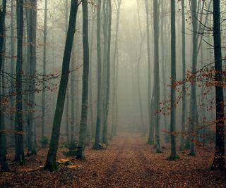 Обои на телефон туман, природа, лес
