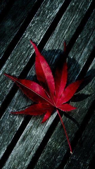 Обои на телефон 1080p, hd, красые, дерево, листья, макро, упавший
