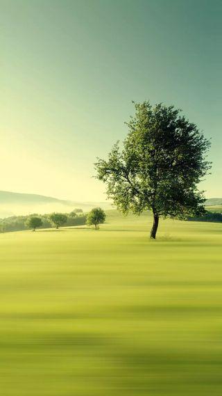 Обои на телефон дерево, природа, зеленые, естественные, деревья, hd