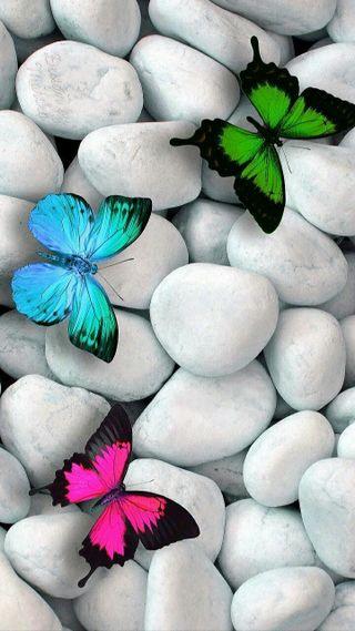Обои на телефон летать, красота, бабочки, butterflies beauty