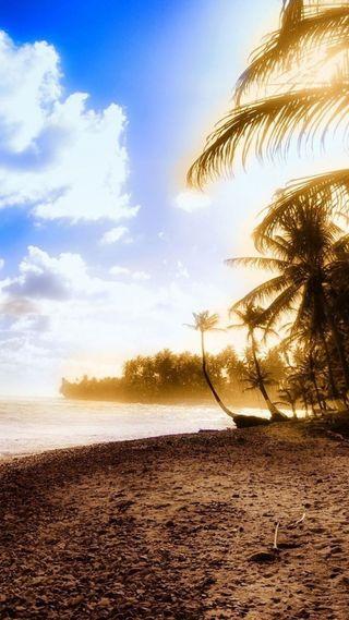 Обои на телефон остров, море, закат, дерево
