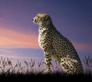 Обои на телефон леопард, кошки, кошачий, животные, дикие, hd, big, affrica, 4k