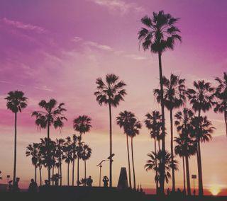 Обои на телефон пальмы, фиолетовые, пляж, пейзаж, закат