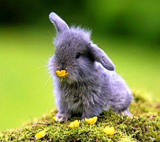 Обои на телефон кролик, милые, sweet bunny