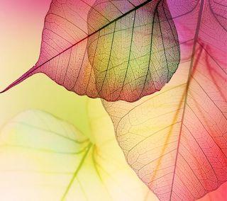 Обои на телефон осень, листья, transparent
