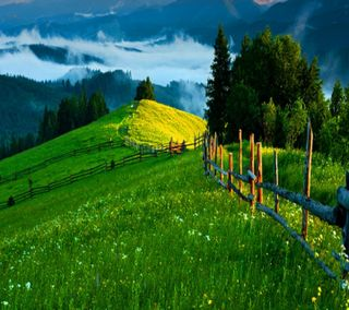 Обои на телефон hd, природа, зеленые, весна, страна