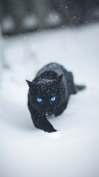 Обои на телефон черные, зима, снег, животные, кошки, котята, погода