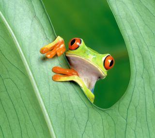 Обои на телефон эпл, природа, прекрасные, лягушка, зеленые, mac, apple