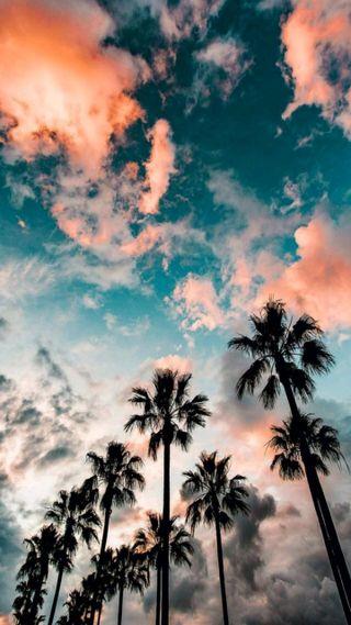 Обои на телефон пляж, пальмы, красочные, деревья