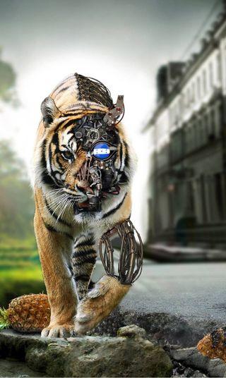 Обои на телефон тигр, tigres, honduras