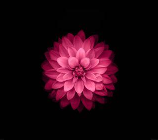 Обои на телефон r3d, черные, красые, розовые, прекрасные, фиолетовые, цветы, лотус, топ