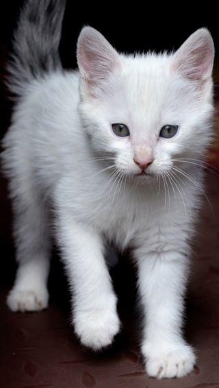 Обои на телефон фортнайт, самсунг, наруто, любовь, кошки, котята, бтс, аниме, айфон, whatsapp, samsung, love, kitten love, iphone, fortnite, bts