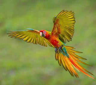 Обои на телефон попугай, птицы, полет, летать, животные
