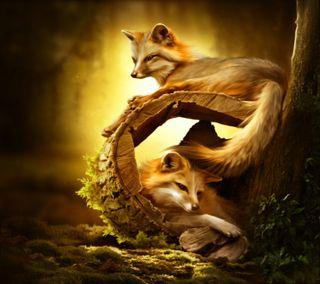 Обои на телефон лиса, животные