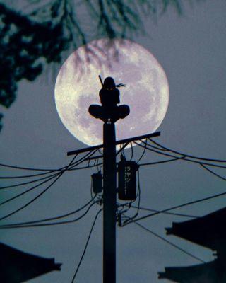 Обои на телефон итачи, луна, obnubilant