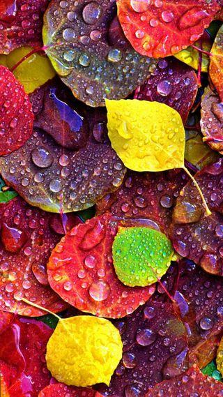Обои на телефон мокрые, листья, дождь, wet leaves