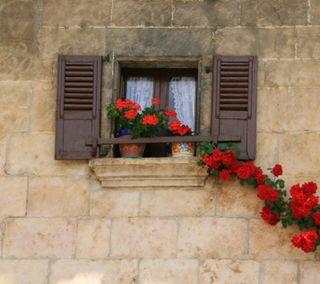 Обои на телефон окно, цветы, стена, красые, what the heck 9, shutters