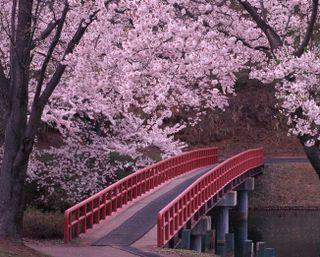 Обои на телефон река, природа, мост, деревья, весна
