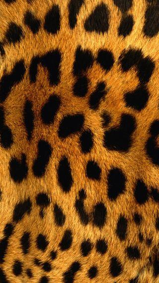 Обои на телефон leopard print, supreme, swag, кошки, тигр, леопард, принт