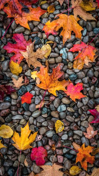 Обои на телефон сцены, камни, природа, осень, листья, брызги