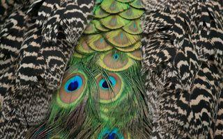 Обои на телефон перья, цветные, приятные, новый, лучшие