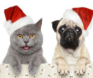 Обои на телефон каникулы, собаки, рождество, кошки, christmas caps, cat and dog