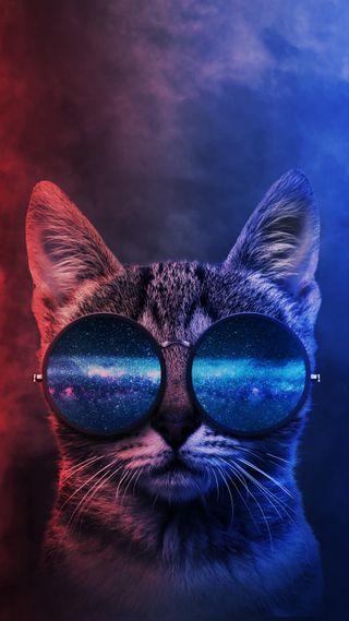 Обои на телефон современные, экран, чистые, хасака, фотография, туман, темные, телефон, солнечные очки, портрет, оттенок, неоновые, минимализм, милые, крутые, кошки, котята, животные, дым, галактика, блокировка, phone wallpaper, looking cool, galaxy, duo tone, cool cat, cat wear sunglasses, cat portrait, cat phone wallpaper, Looking